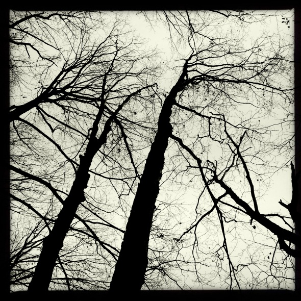 After storm / leafless woods waving / bare branches. Haikumages