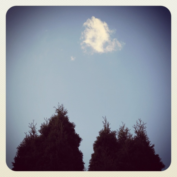 Volleyball / two trees bandy about / a small cloud.