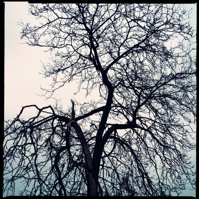 Branches, twigs / think of leaves who left / them barren. Haikumages