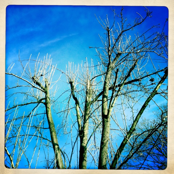 Barren branches bask / in the winter morning light / but do not find warmth. Haikumages