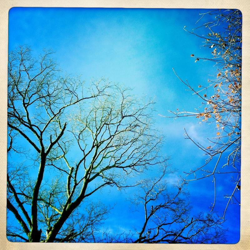 Secret place / treetops, unseen by / downcast eyes. Haikumages