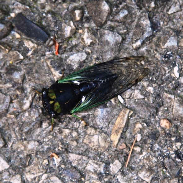 Crickets, cicadas / vociferously debate / whether it will rain.  Haikumages