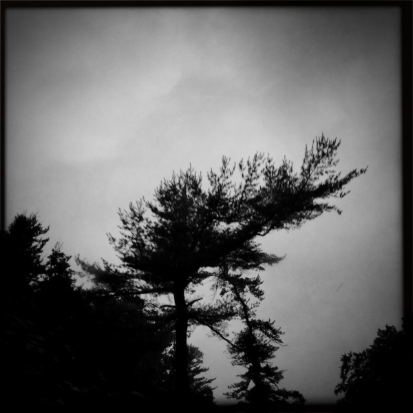 Morning in mourning / thickening clouds, a dark veil / pulled across her face. Haikumages