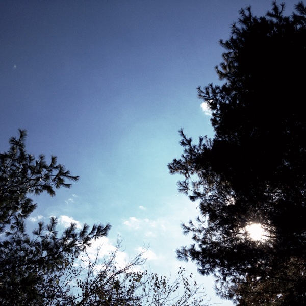 Whipping wickedly / chill wind makes a liar of / brightly shining sun. Haikumages