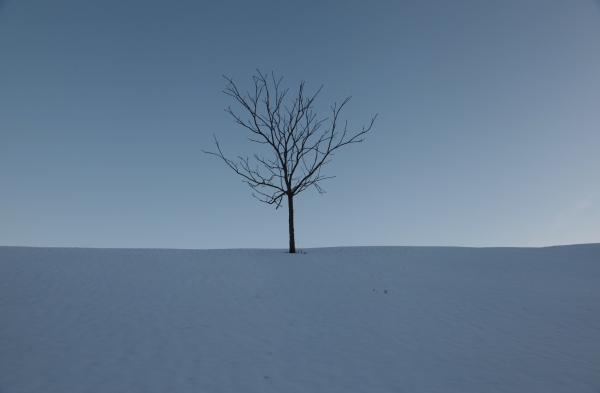 The polar vortex / far from home, holds us tightly / in its icy grip. Haikumages