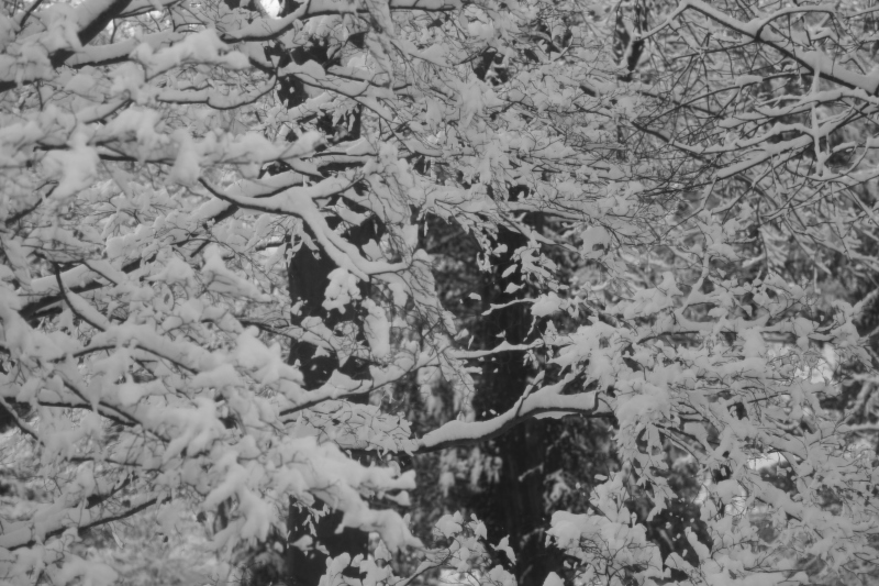 New snow falling on / old snow, adding fresh insult / to my injuries. Haikumages