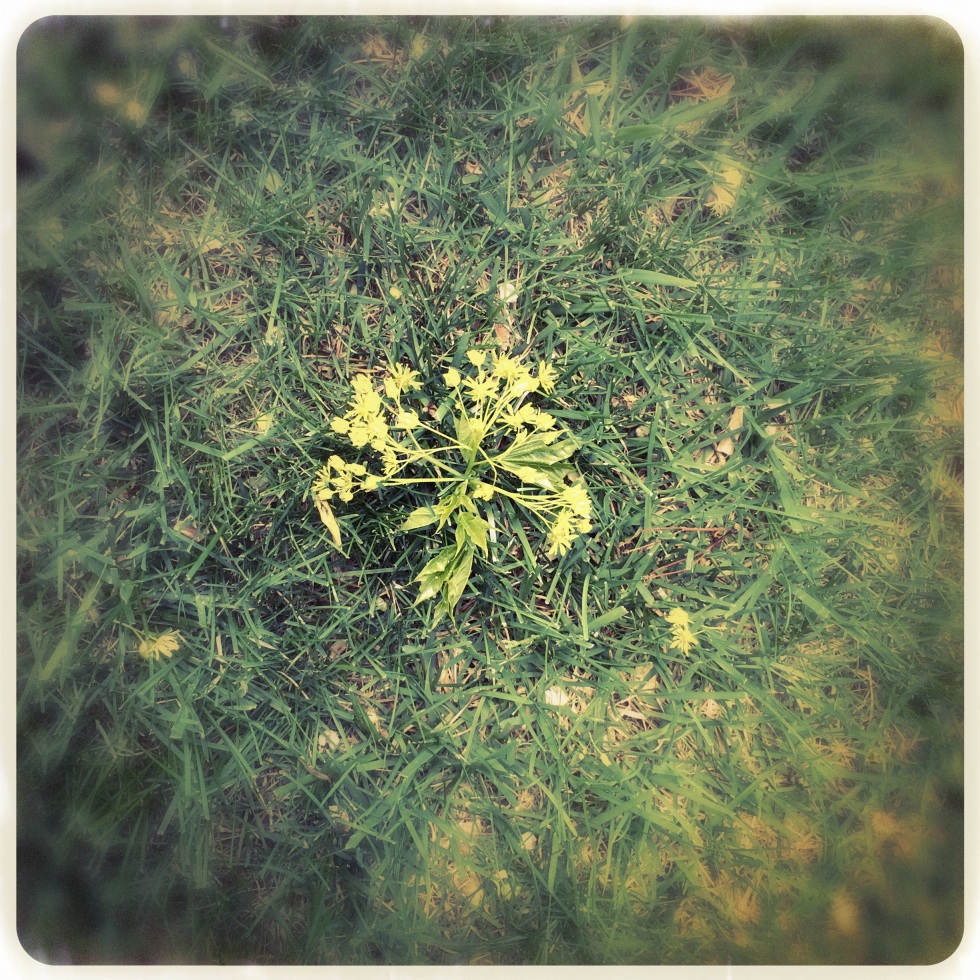 Tree's spring flower flung / by an unseasonable / and frivolous wind. Haikumages