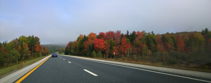 Sumac, maple reds / first autumn brushstrokes from the / north country palette.   haikumages