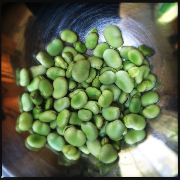 Looking at the bowl / full of fava beans and wish / I had chianti. // haikumages