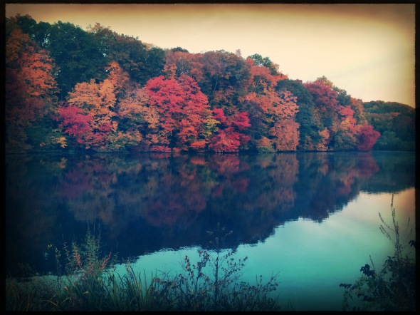 Foliage colors / across the still lake water / lit by the dawn sky. // micropoetry - haiku - haikumages
