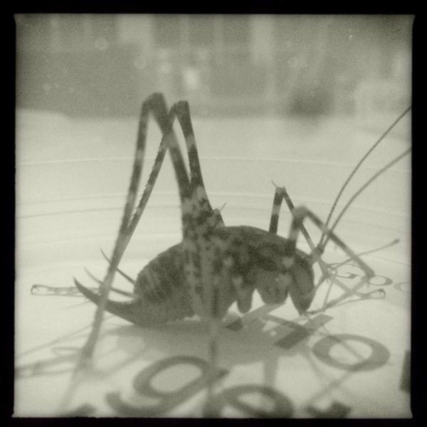 October cricket / rubs his thin legs together / keeping himself warm. // micropoetry - haiku - haikumages