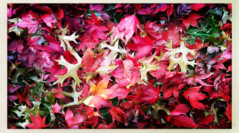 Swan song of the leaves / a final act of beauty / then fall to their death. // haikumages - micropoetry - haiku
