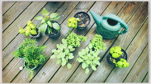 Plants wait for planting / watering can sits idle / in a cold Spring rain.  // haiku - micropoetry - haikumages