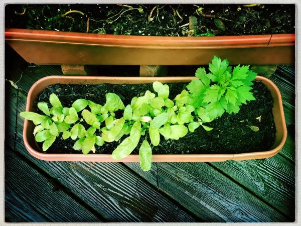 Warm September rain / quenching garden's ebbing thirst / at season's ending. // haiku - micropoetry - haikumages