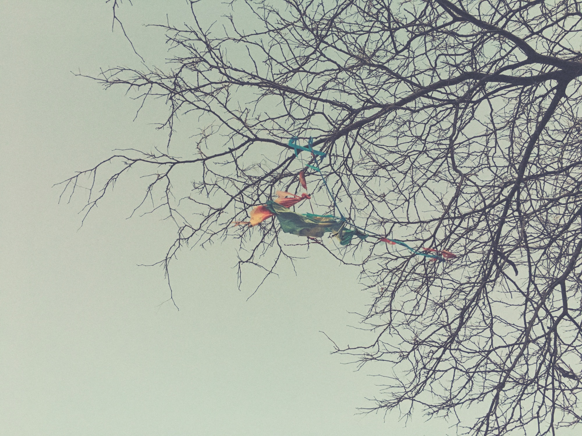 Late autumn reveals / the summer kite whose journey / ended in a tree. // haiku - micropoetry - haikumages