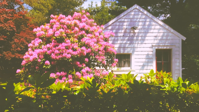 Not to be outdone / the other side of the yard / is now in full bloom. // haiku - micropoetry - haikumages