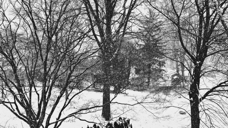 Heavy falling snow / a soft white noise percussion / on trees, ground and things. // micropoetry - haiku - haikumages